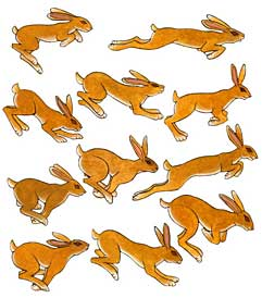 Hares from The Rumor